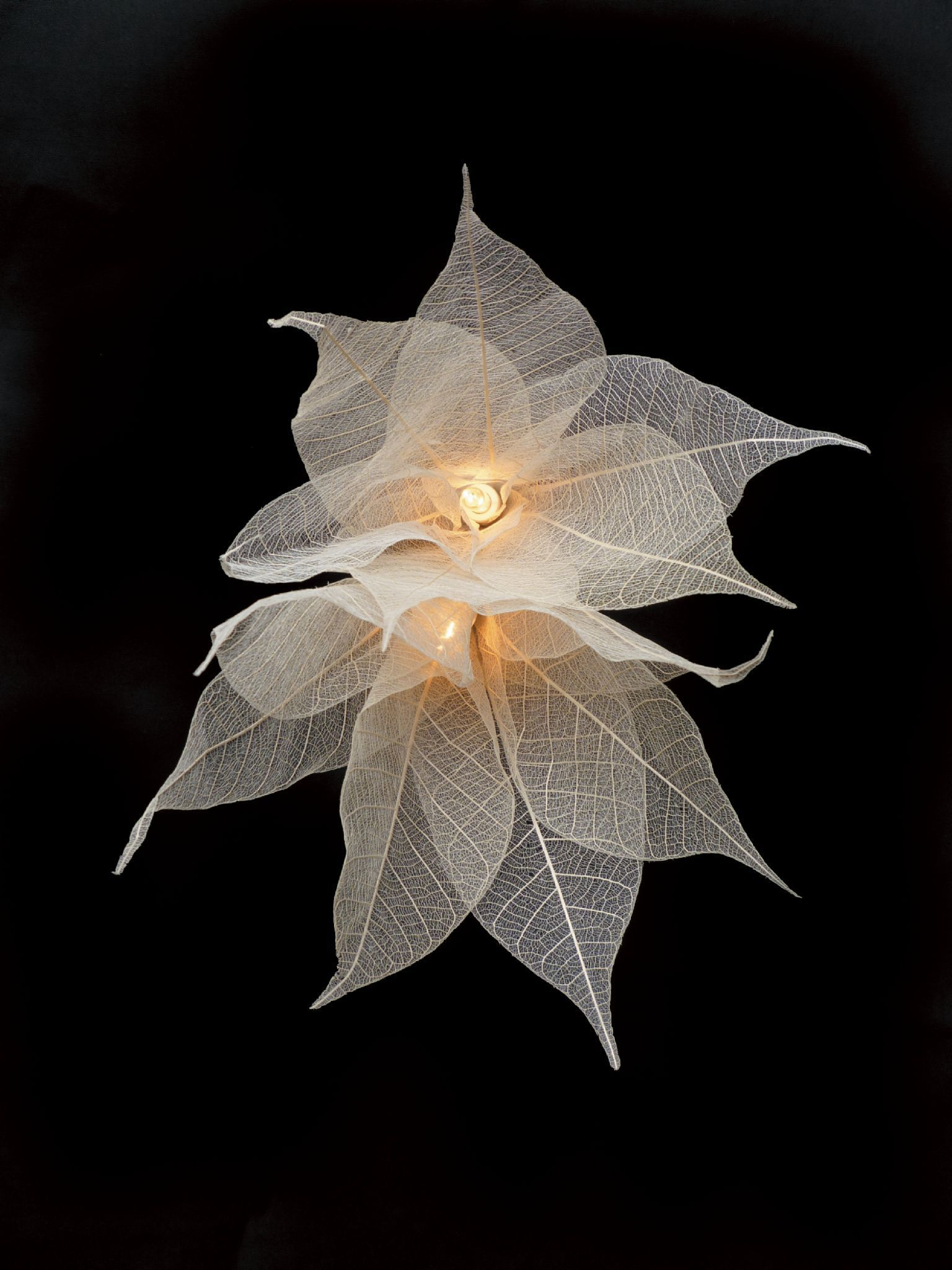 new product 68b49 7674d Leaf Fairy Lights - White